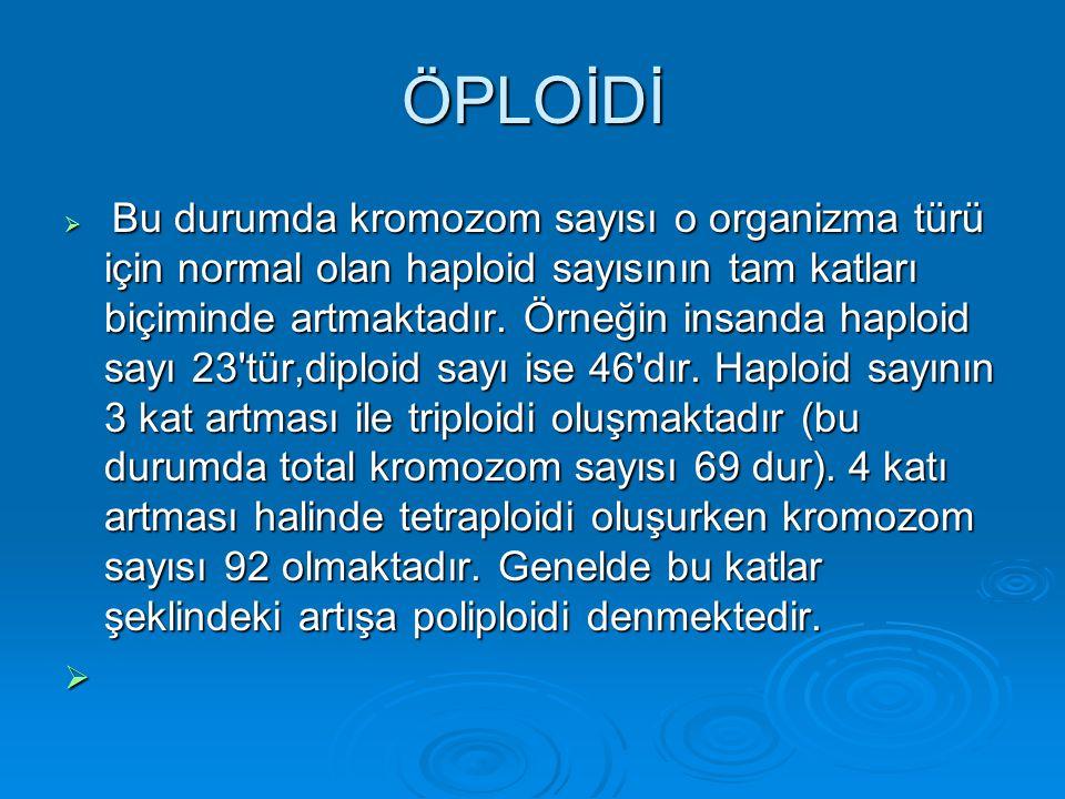 1.Kromozomların Sayısal Anomalileri a) Öploidi (Euploidi) a) Öploidi (Euploidi) b) Anöploidi (Aneuploidi) b) Anöploidi (Aneuploidi)