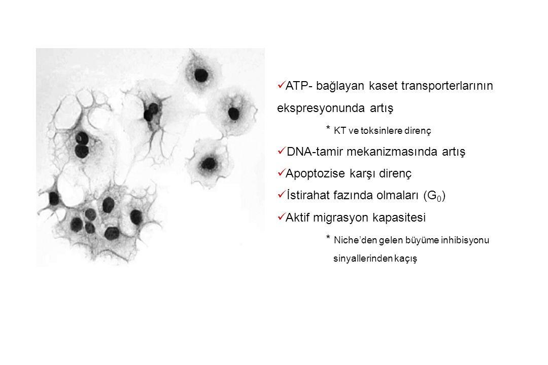 ATP- bağlayan kaset transporterlarının ekspresyonunda artış * KT ve toksinlere direnç DNA-tamir mekanizmasında artış Apoptozise karşı direnç İstirahat