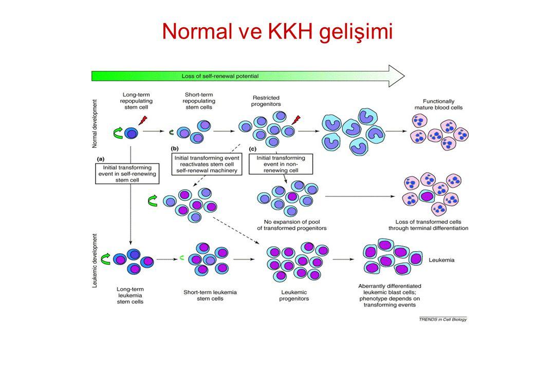 Normal ve KKH gelişimi