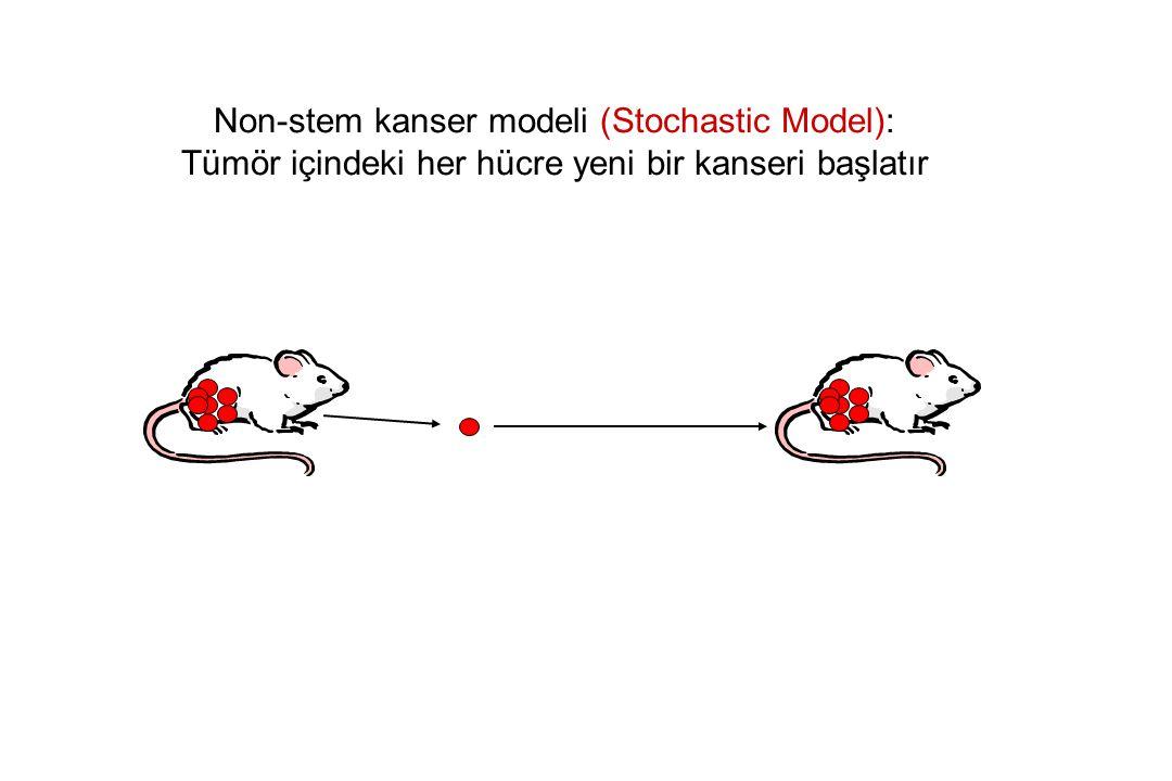 Non-stem kanser modeli (Stochastic Model): Tümör içindeki her hücre yeni bir kanseri başlatır