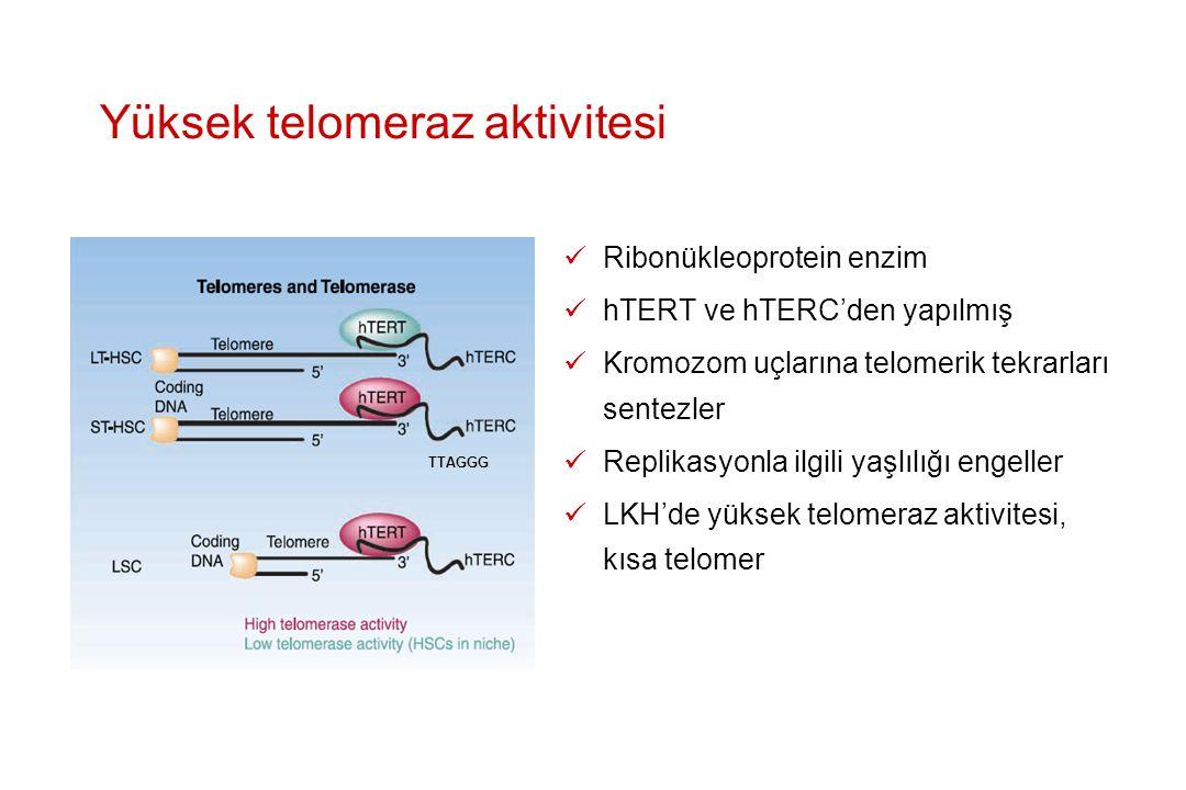 Yüksek telomeraz aktivitesi Ribonükleoprotein enzim hTERT ve hTERC'den yapılmış Kromozom uçlarına telomerik tekrarları sentezler Replikasyonla ilgili