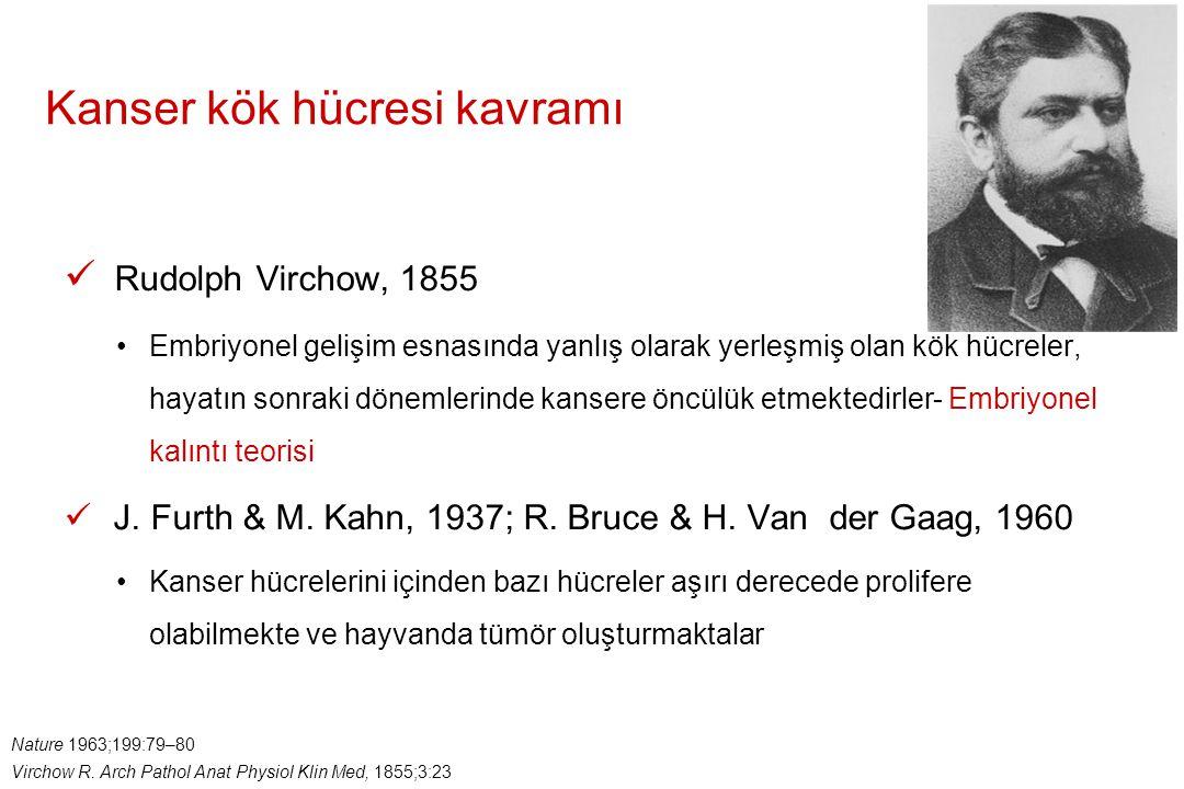 Kanser kök hücresi kavramı Nature 1963;199:79–80 Virchow R. Arch Pathol Anat Physiol Klin Med, 1855;3:23 Rudolph Virchow, 1855 Embriyonel gelişim esna