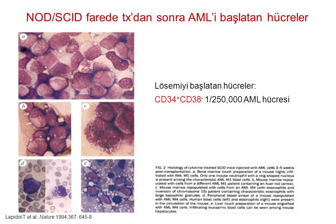 Lösemiyi başlatan hücreler: CD34 + CD38 - 1/250,000 AML hücresi NOD/SCID farede tx'dan sonra AML'i başlatan hücreler Lapidot T et al. Nature 1994;367: