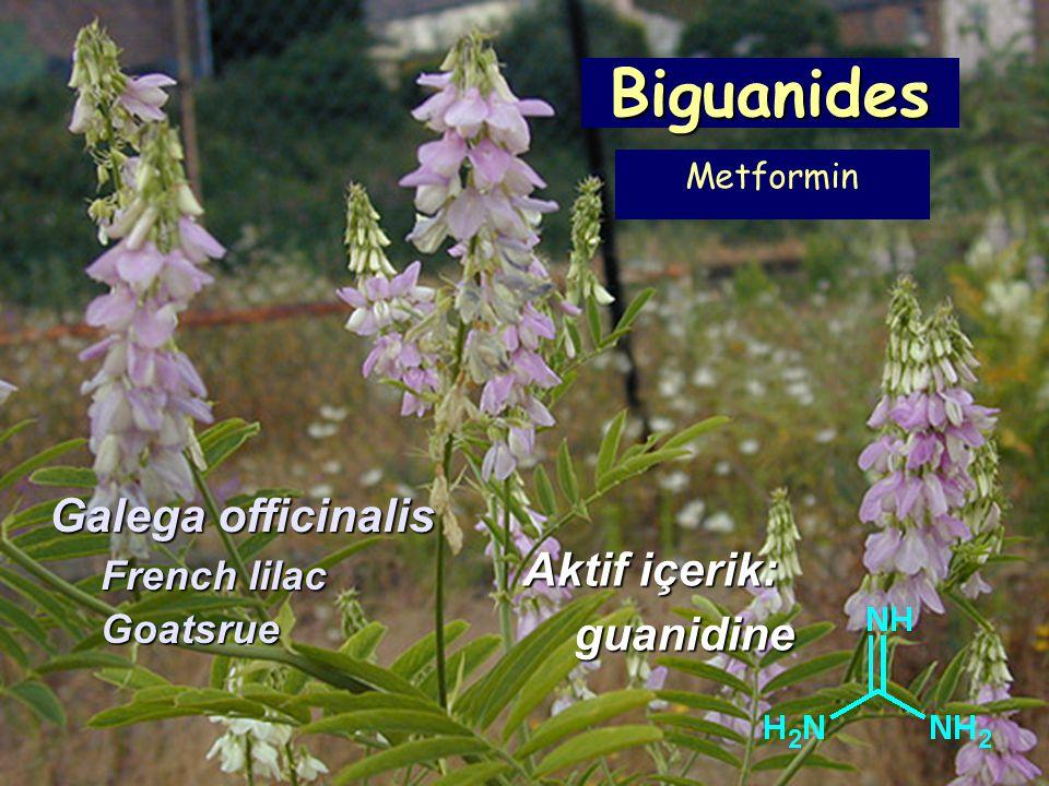 Biguanides Galega officinalis French lilac Goatsrue Aktif içerik: guanidine Metformin