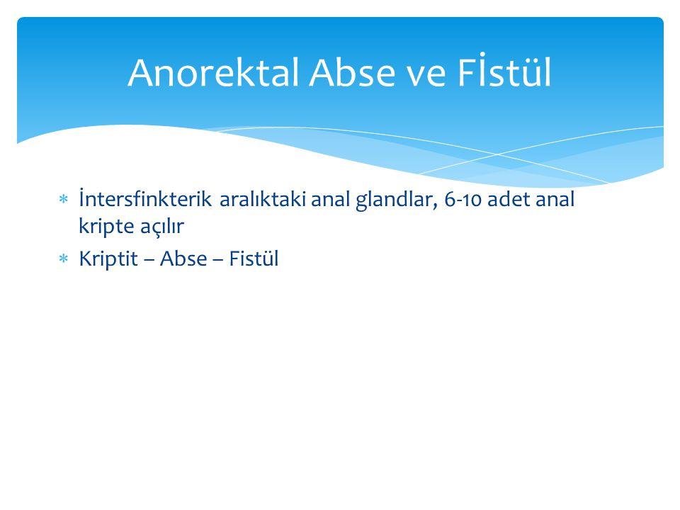  İntersfinkterik aralıktaki anal glandlar, 6-10 adet anal kripte açılır  Kriptit – Abse – Fistül Anorektal Abse ve Fİstül