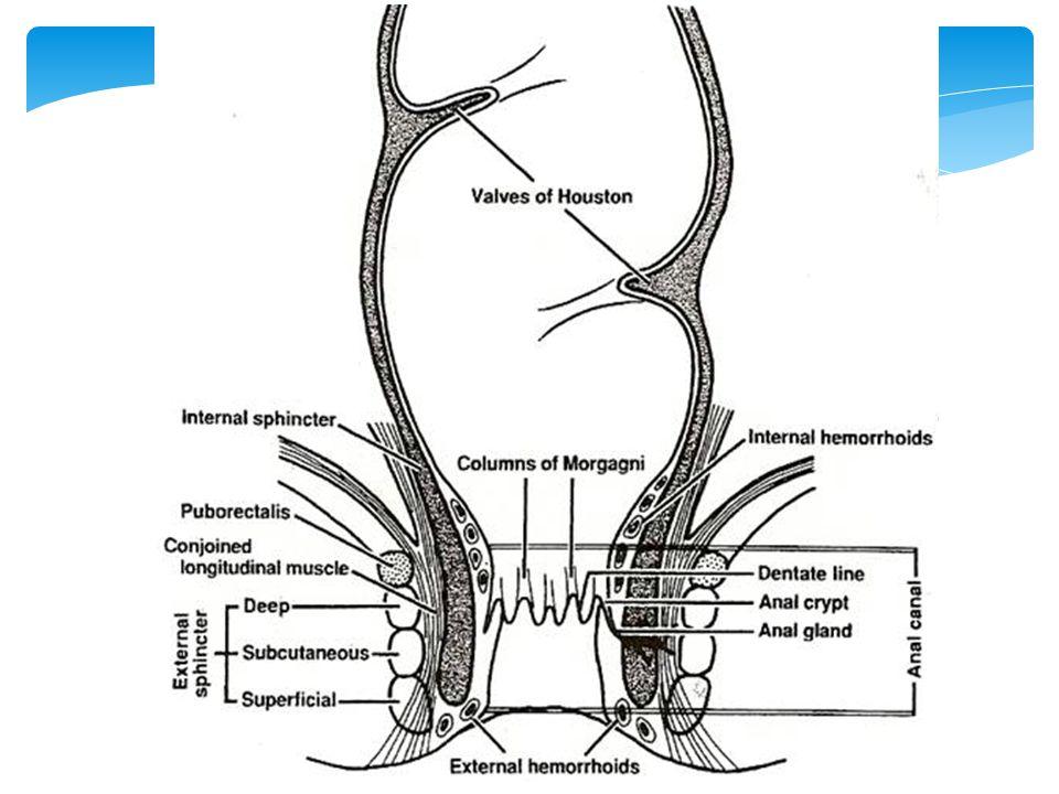  Perianal  İskiorektal  Yüksek intermuskuler, rektum duvar kasları arası  Supralevator %2-3, iskiorektal uzantısı veya PID Anorektal Abse