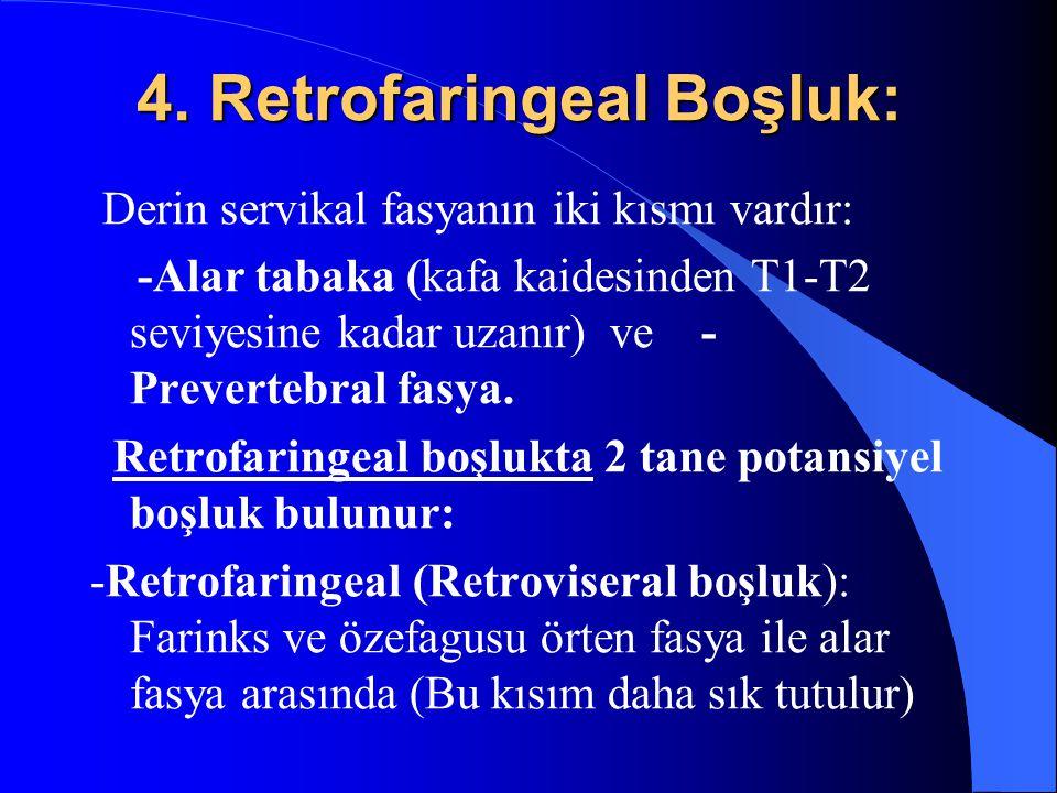 4. Retrofaringeal Boşluk: Derin servikal fasyanın iki kısmı vardır: -Alar tabaka (kafa kaidesinden T1-T2 seviyesine kadar uzanır) ve - Prevertebral fa