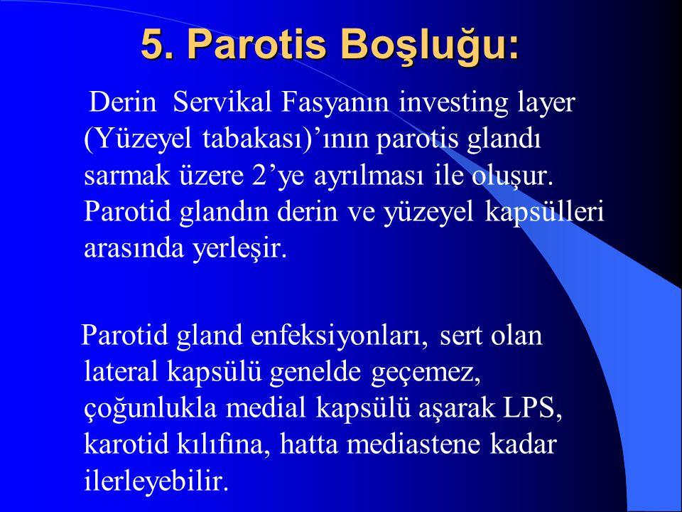 5. Parotis Boşluğu: Derin Servikal Fasyanın investing layer (Yüzeyel tabakası)'ının parotis glandı sarmak üzere 2'ye ayrılması ile oluşur. Parotid gla