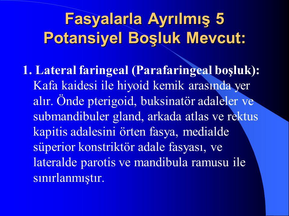 Fasyalarla Ayrılmış 5 Potansiyel Boşluk Mevcut: 1. Lateral faringeal (Parafaringeal boşluk): Kafa kaidesi ile hiyoid kemik arasında yer alır. Önde pte