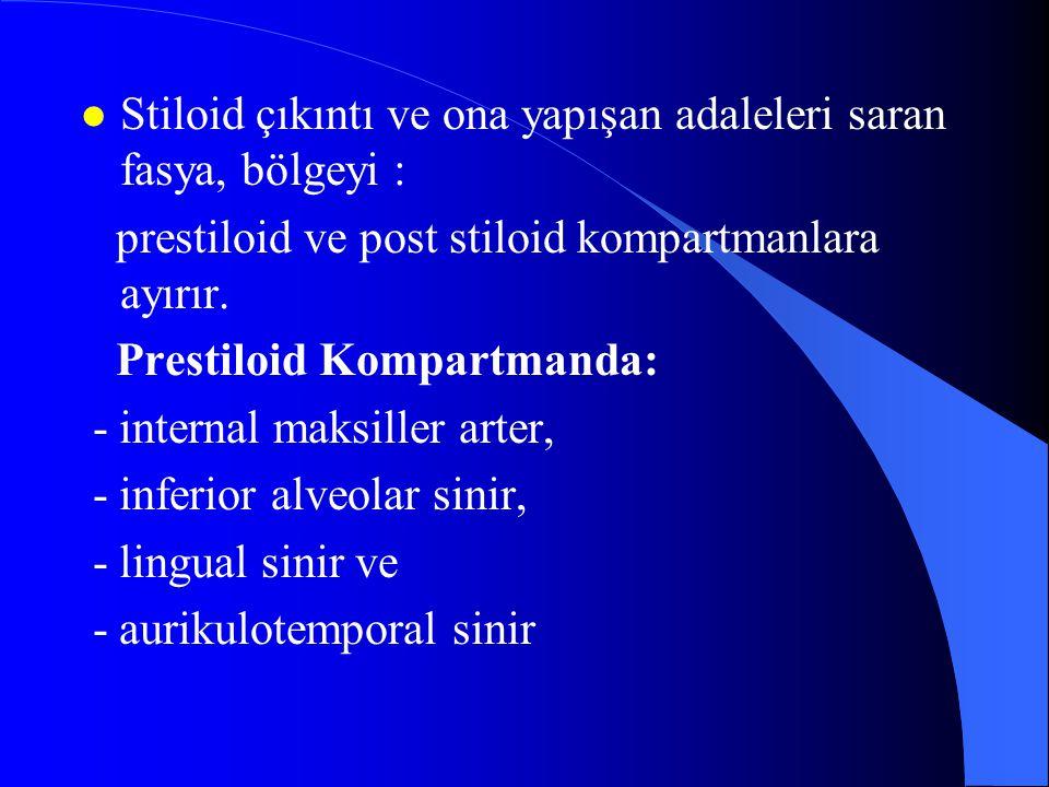 l Stiloid çıkıntı ve ona yapışan adaleleri saran fasya, bölgeyi : prestiloid ve post stiloid kompartmanlara ayırır. Prestiloid Kompartmanda: - interna