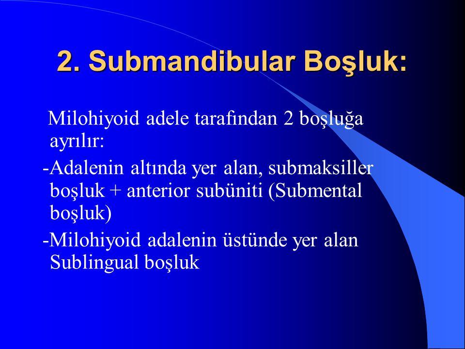 2. Submandibular Boşluk: Milohiyoid adele tarafından 2 boşluğa ayrılır: -Adalenin altında yer alan, submaksiller boşluk + anterior subüniti (Submental