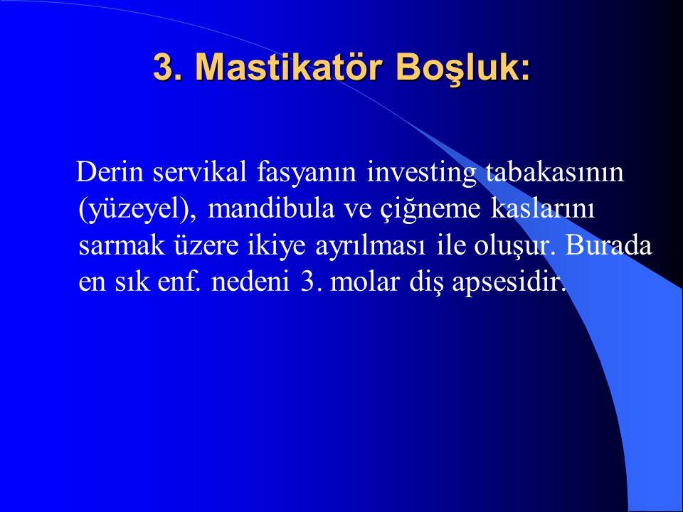 3. Mastikatör Boşluk: Derin servikal fasyanın investing tabakasının (yüzeyel), mandibula ve çiğneme kaslarını sarmak üzere ikiye ayrılması ile oluşur.