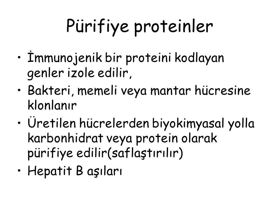 Pürifiye proteinler İmmunojenik bir proteini kodlayan genler izole edilir, Bakteri, memeli veya mantar hücresine klonlanır Üretilen hücrelerden biyokimyasal yolla karbonhidrat veya protein olarak pürifiye edilir(saflaştırılır) Hepatit B aşıları