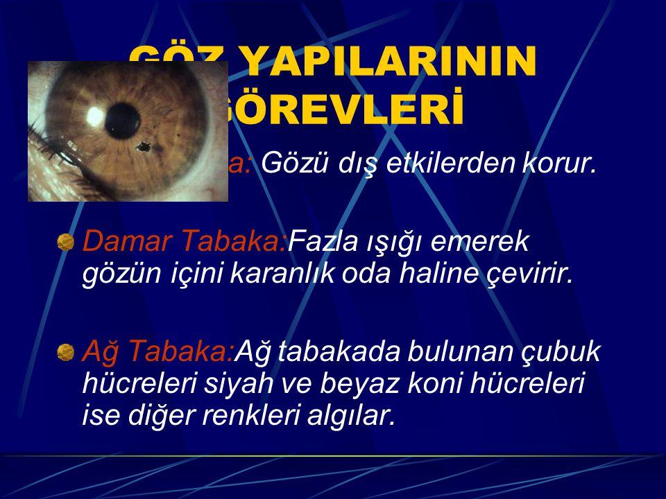 GÖZÜN YAPISI Sert Tabaka:Göz yuvarlağını en dıştan saran sıkı bağ doku liflerinden oluşmuş tabakadır. Damar Tabaka:Siyah renkli ince ve gevşek yapılıd