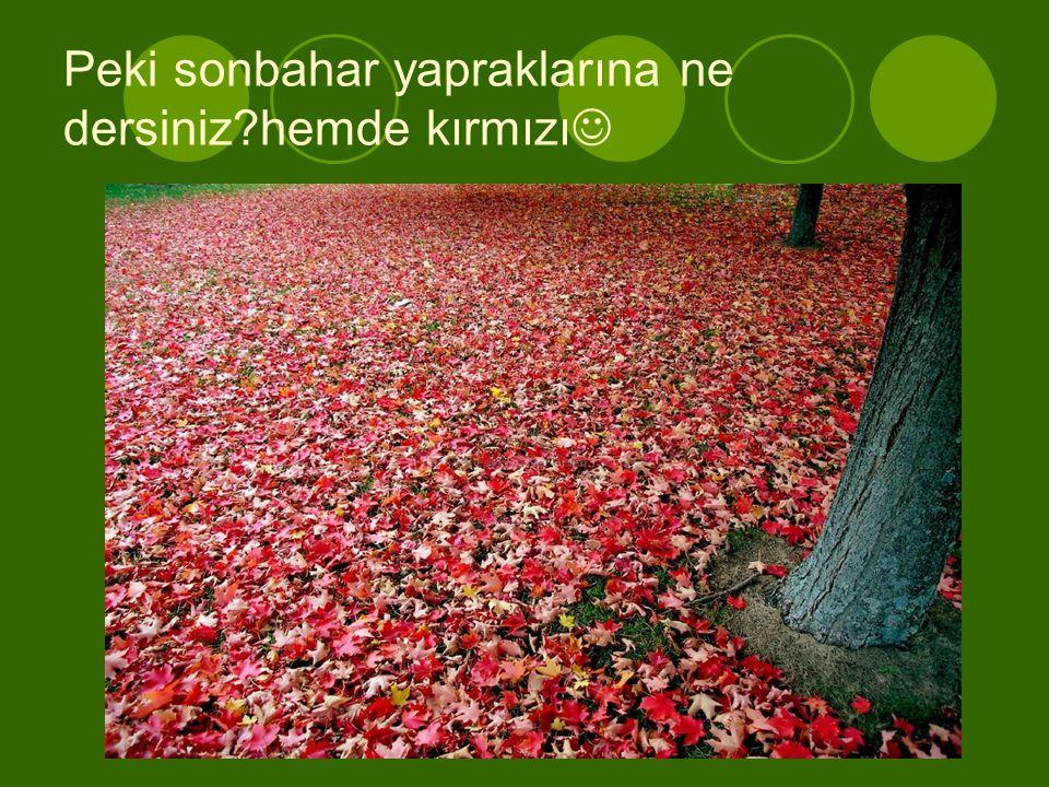Peki sonbahar yapraklarına ne dersiniz?hemde kırmızı