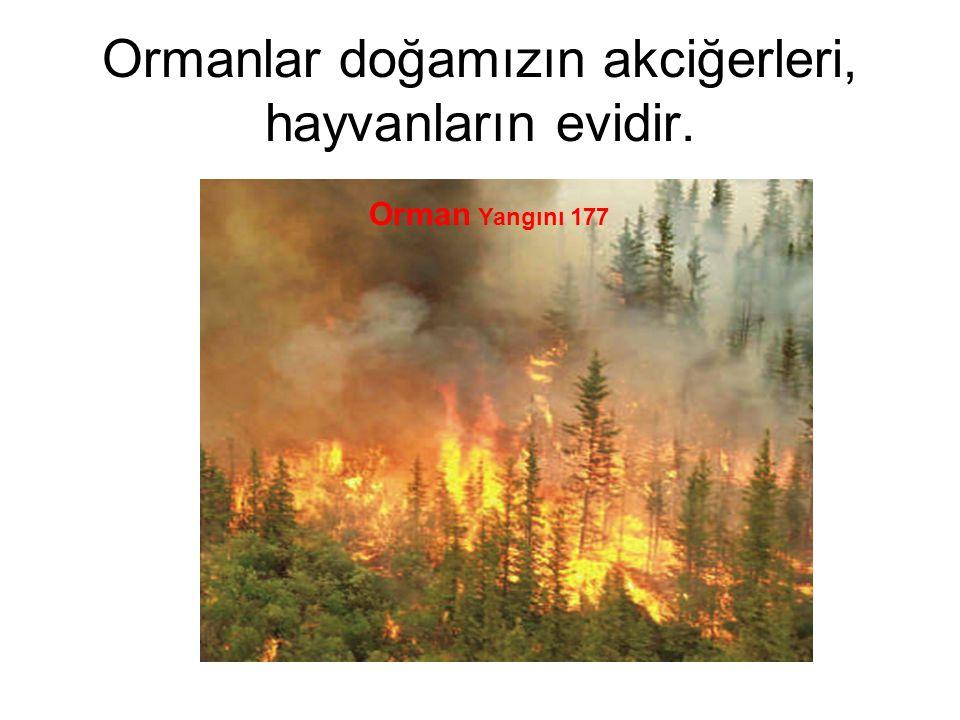 Ormanlar doğamızın akciğerleri, hayvanların evidir. Orman Yangını 177