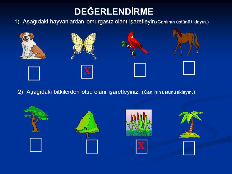 DEĞERLENDİRME 1)Aşağıdaki hayvanlardan omurgasız olanı işaretleyin.(Canlının üstünü tıklayın.) 2)Aşağıdaki bitkilerden otsu olanı işaretleyiniz. ( Can