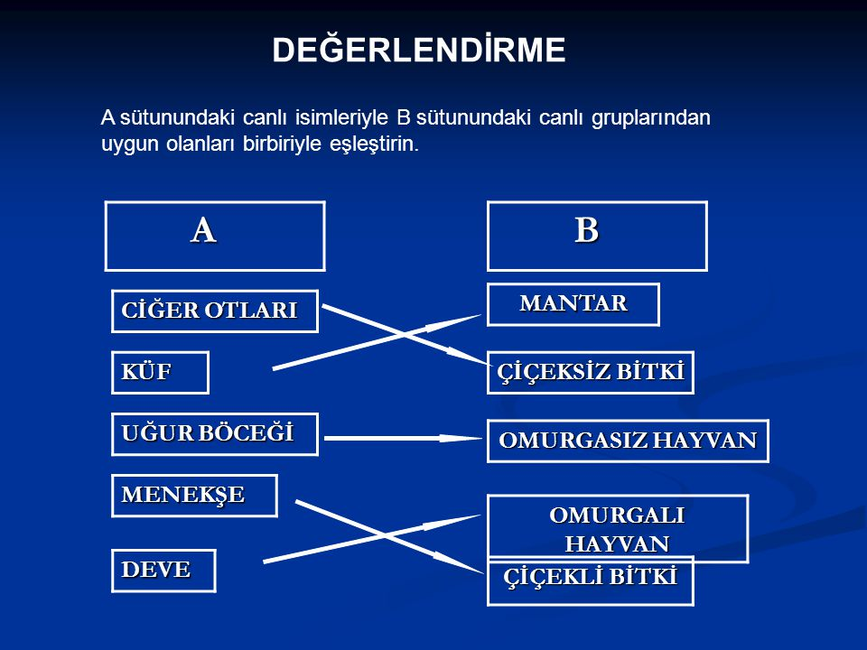 DEĞERLENDİRME A sütunundaki canlı isimleriyle B sütunundaki canlı gruplarından uygun olanları birbiriyle eşleştirin. A B CİĞER OTLARI ÇİÇEKSİZ BİTKİ O