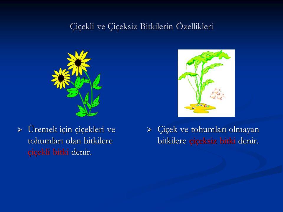 Çiçekli ve Çiçeksiz Bitkilerin Özellikleri  Üremek için çiçekleri ve tohumları olan bitkilere çiçekli bitki denir.  Çiçek ve tohumları olmayan bitki