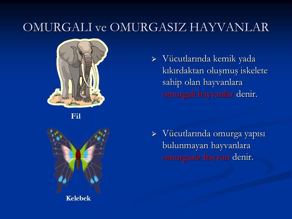 OMURGALI ve OMURGASIZ HAYVANLAR  Vücutlarında kemik yada kıkırdaktan oluşmuş iskelete sahip olan hayvanlara omurgalı hayvanlar denir.  Vücutlarında