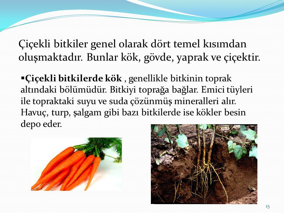 15 Çiçekli bitkiler genel olarak dört temel kısımdan oluşmaktadır. Bunlar kök, gövde, yaprak ve çiçektir.  Çiçekli bitkilerde kök, genellikle bitkini
