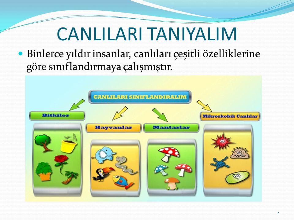 CANLILARI TANIYALIM Binlerce yıldır insanlar, canlıları çeşitli özelliklerine göre sınıflandırmaya çalışmıştır. 2