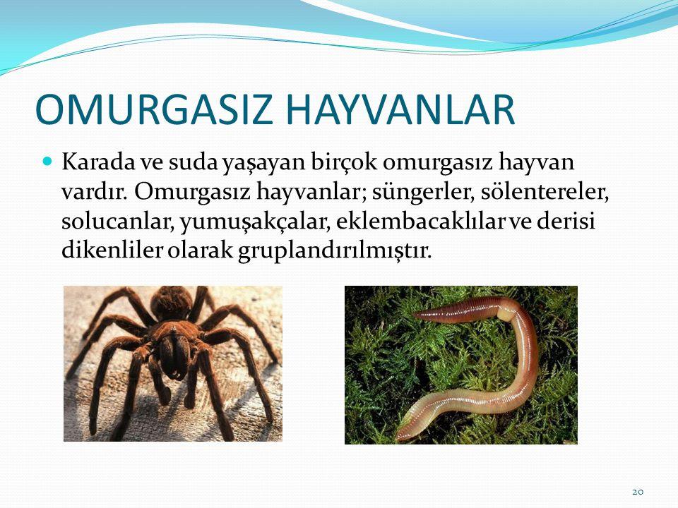 OMURGASIZ HAYVANLAR Karada ve suda yaşayan birçok omurgasız hayvan vardır. Omurgasız hayvanlar; süngerler, sölentereler, solucanlar, yumuşakçalar, ekl