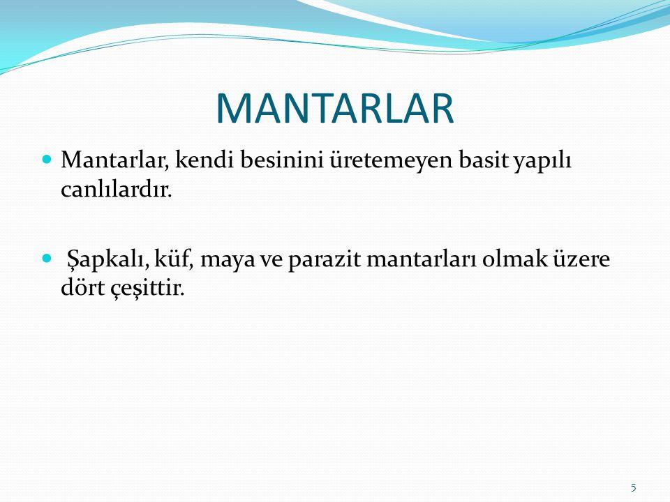 MANTARLAR Mantarlar, kendi besinini üretemeyen basit yapılı canlılardır. Şapkalı, küf, maya ve parazit mantarları olmak üzere dört çeşittir. 5