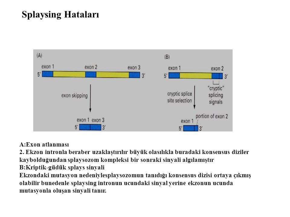 Splaysing Hataları A:Exon atlanması 2. Ekzon intronla beraber uzaklaştırılır büyük olasılıkla buradaki konsensus diziler kaybolduğundan splaysozom kom