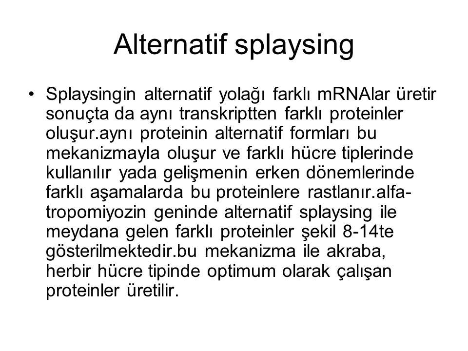 Alternatif splaysing Splaysingin alternatif yolağı farklı mRNAlar üretir sonuçta da aynı transkriptten farklı proteinler oluşur.aynı proteinin alterna