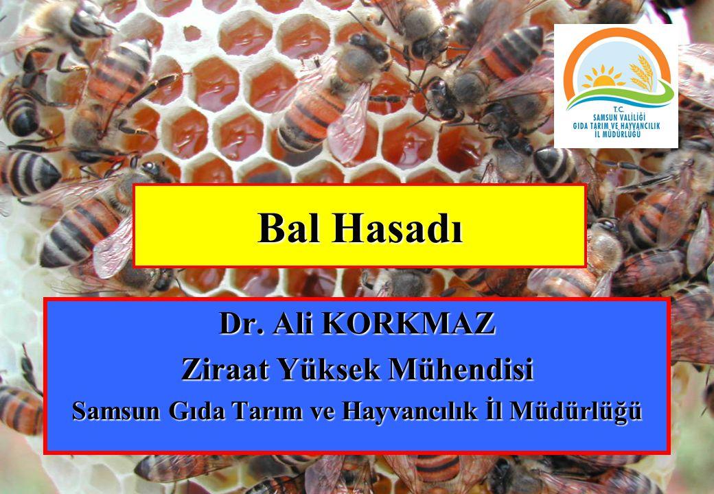 Bal Hasadı Dr. Ali KORKMAZ Ziraat Yüksek Mühendisi Samsun Gıda Tarım ve Hayvancılık İl Müdürlüğü