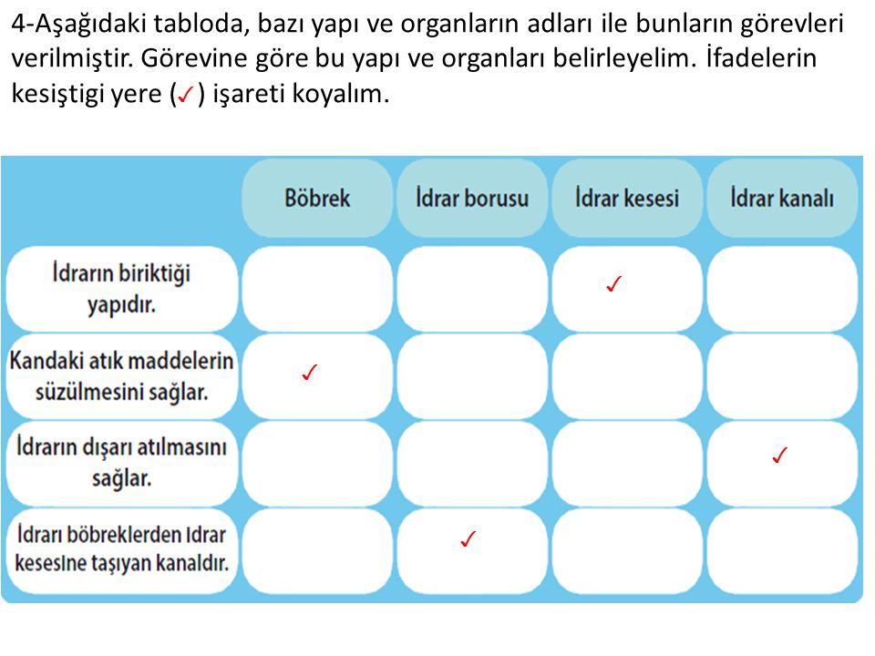 4-Aşağıdaki tabloda, bazı yapı ve organların adları ile bunların görevleri verilmiştir. Görevine göre bu yapı ve organları belirleyelim. İfadelerin ke