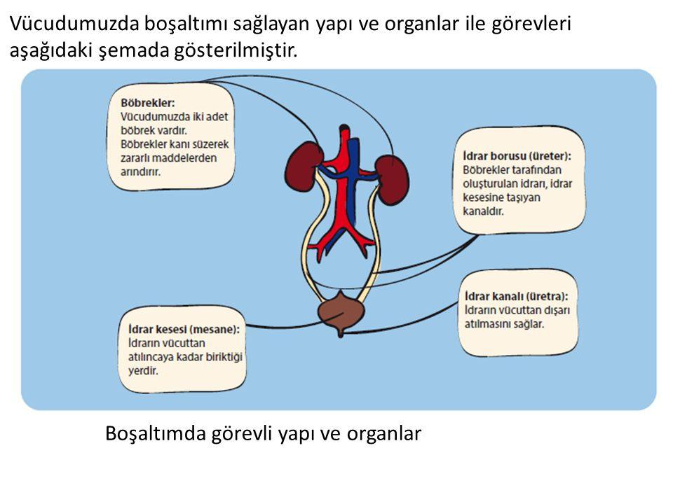 Vücudumuzda boşaltımı sağlayan yapı ve organlar ile görevleri aşağıdaki şemada gösterilmiştir. Boşaltımda görevli yapı ve organlar