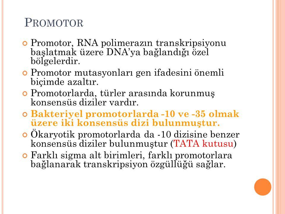 P ROMOTOR Promotor, RNA polimerazın transkripsiyonu başlatmak üzere DNA'ya bağlandığı özel bölgelerdir. Promotor mutasyonları gen ifadesini önemli biç