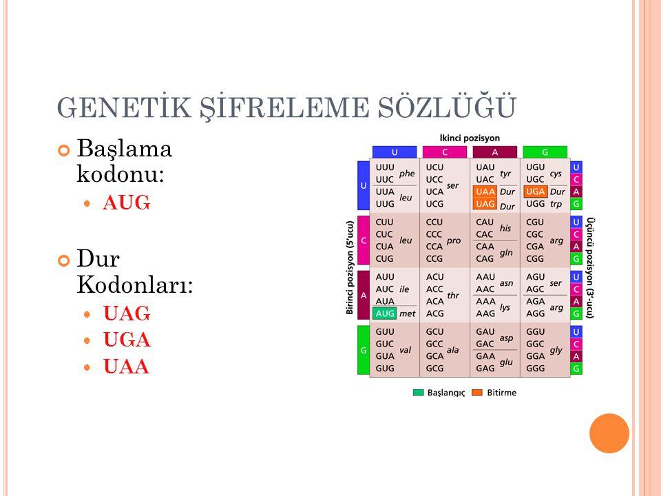 GENETİK ŞİFRELEME SÖZLÜĞÜ Başlama kodonu: AUG Dur Kodonları: UAG UGA UAA