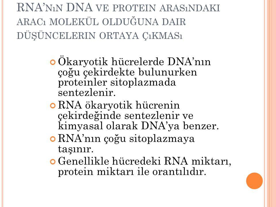 RNA' NıN DNA VE PROTEIN ARASıNDAKI ARACı MOLEKÜL OLDUĞUNA DAIR DÜŞÜNCELERIN ORTAYA ÇıKMASı Ökaryotik hücrelerde DNA'nın çoğu çekirdekte bulunurken pro