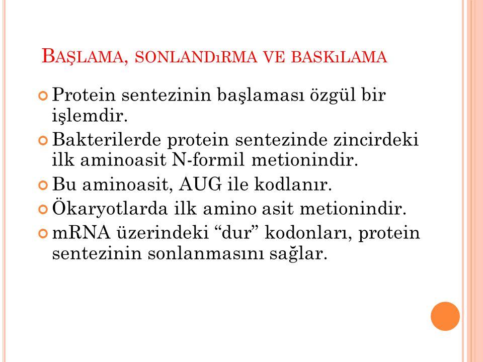 B AŞLAMA, SONLANDıRMA VE BASKıLAMA Protein sentezinin başlaması özgül bir işlemdir. Bakterilerde protein sentezinde zincirdeki ilk aminoasit N-formil