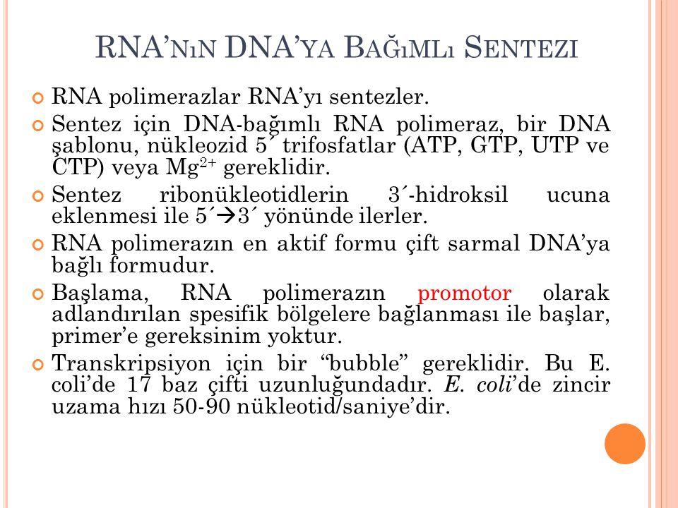 RNA' NıN DNA' YA B AĞıMLı S ENTEZI RNA polimerazlar RNA'yı sentezler. Sentez için DNA-bağımlı RNA polimeraz, bir DNA şablonu, nükleozid 5´ trifosfatla