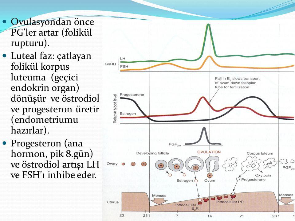 Ovulasyondan önce PG'ler artar (folikül rupturu). Luteal faz: çatlayan folikül korpus luteuma (geçici endokrin organ) dönüşür ve östrodiol ve progeste