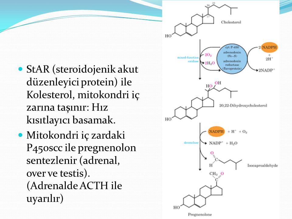 StAR (steroidojenik akut düzenleyici protein) ile Kolesterol, mitokondri iç zarına taşınır: Hız kısıtlayıcı basamak. Mitokondri iç zardaki P450scc ile