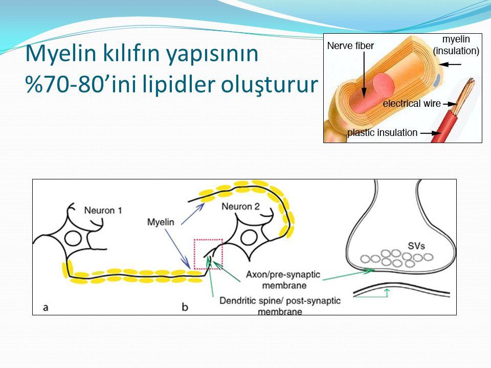 Myelin kılıfın yapısının %70-80'ini lipidler oluşturur
