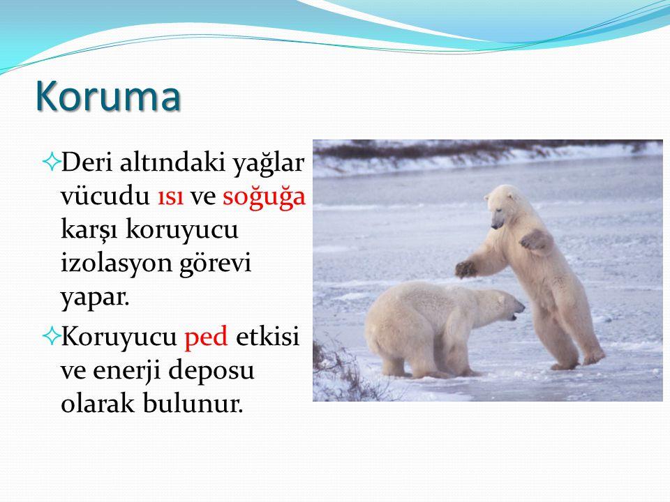 Koruma  Deri altındaki yağlar vücudu ısı ve soğuğa karşı koruyucu izolasyon görevi yapar.  Koruyucu ped etkisi ve enerji deposu olarak bulunur.