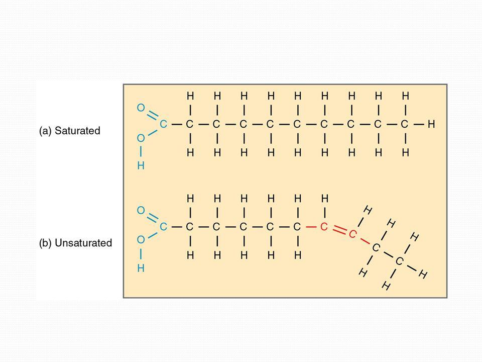 Lipidler hayvan ve bitki hücrelerinde depo edilir