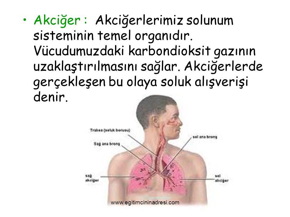 Akciğer : Akciğerlerimiz solunum sisteminin temel organıdır. Vücudumuzdaki karbondioksit gazının uzaklaştırılmasını sağlar. Akciğerlerde gerçekleşen b