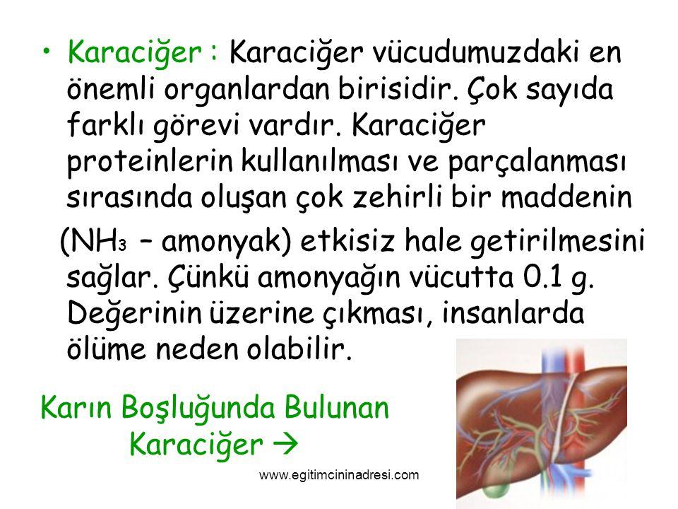 Karaciğer : Karaciğer vücudumuzdaki en önemli organlardan birisidir. Çok sayıda farklı görevi vardır. Karaciğer proteinlerin kullanılması ve parçalanm