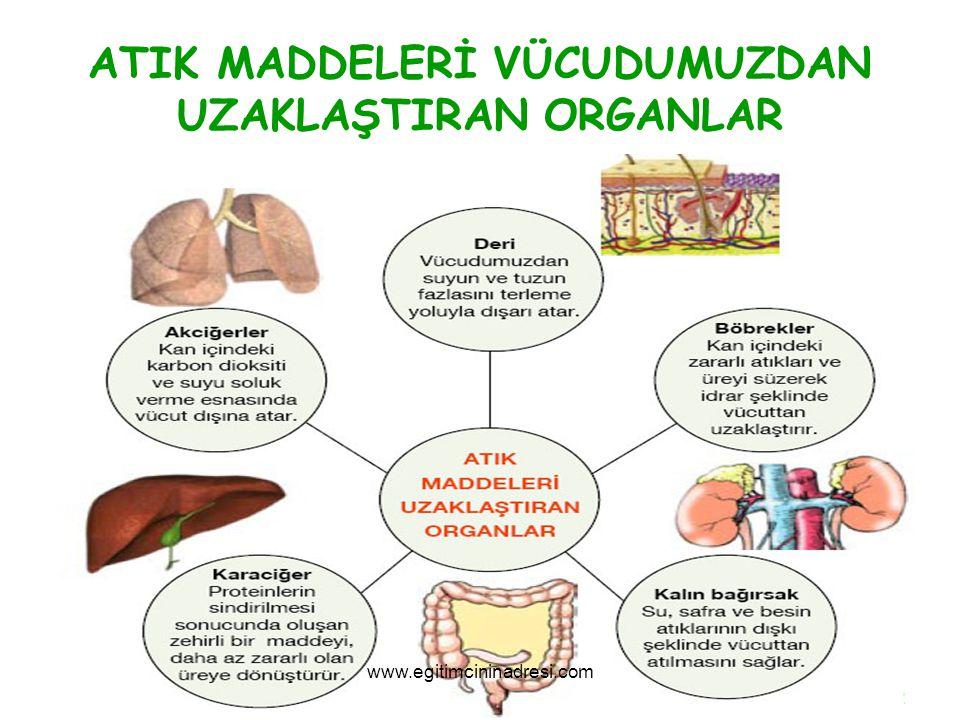 ATIK MADDELERİ VÜCUDUMUZDAN UZAKLAŞTIRAN ORGANLAR www.egitimcininadresi.com