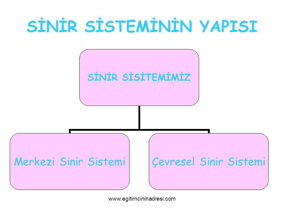 SİNİR SİSTEMİNİN YAPISI SİNİR SİSİTEMİMİZ Merkezi Sinir Sistemi Çevresel Sinir Sistemi www.egitimcininadresi.com