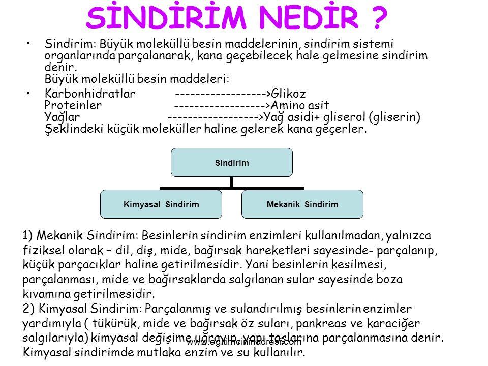 BESİNLER KARBONHİTLARPROTEİNLERYAĞLARMİNERALLERSUVİTAMİNLER www.egitimcininadresi.com