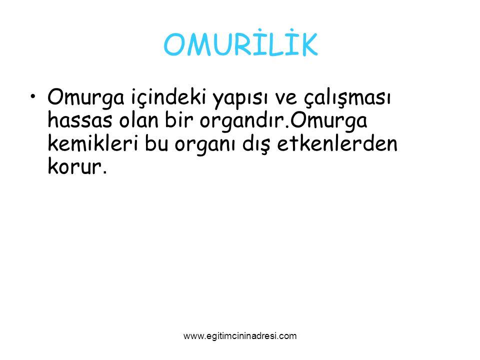 OMURİLİK Omurga içindeki yapısı ve çalışması hassas olan bir organdır.Omurga kemikleri bu organı dış etkenlerden korur. www.egitimcininadresi.com