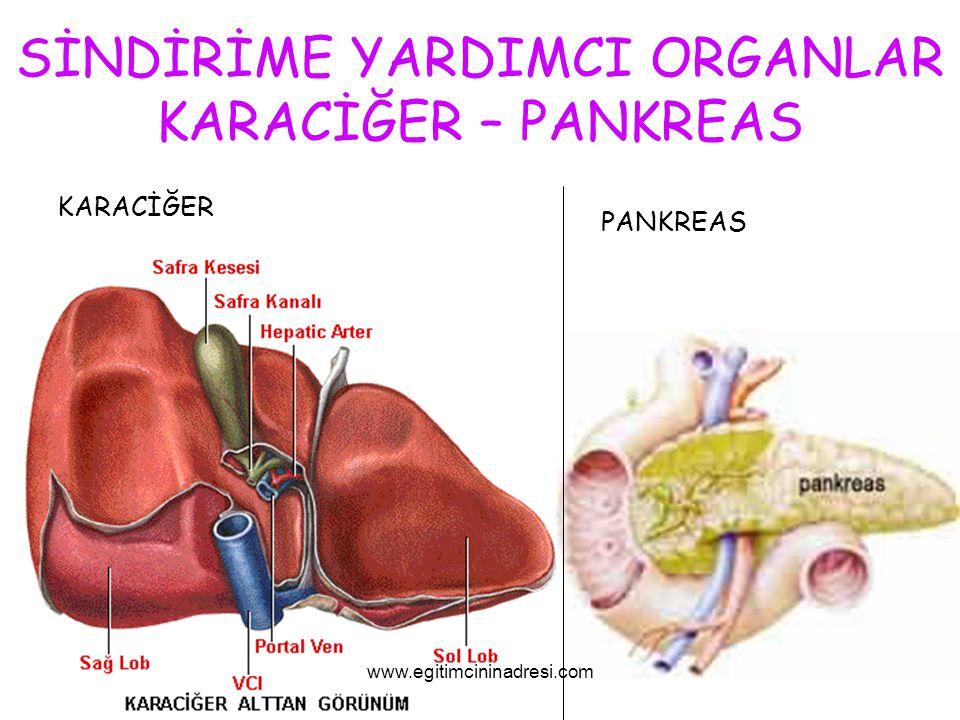 SİNDİRİME YARDIMCI ORGANLAR KARACİĞER – PANKREAS KARACİĞER PANKREAS www.egitimcininadresi.com